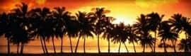 Thumbs Palms-sunset-web-header-01
